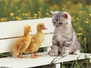 Will it be duck for dinner? Or cat?