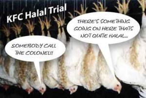 not-quite-halal-300x202
